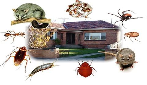 مكافحة حشرات الفجيرة