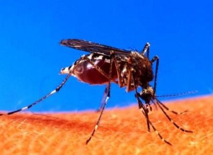 مكافحة حشرات أبو ظبي