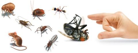 مكافحة حشرات دبي